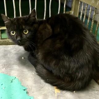 幼さの残る黒猫2匹のきょうだい