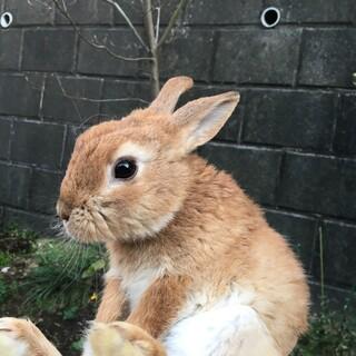 生後半年以内のウサギ♂