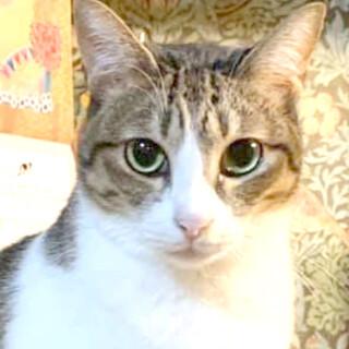 大きな瞳のぽっちゃりツンツン娘。梨花ちゃん