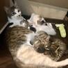 穏やかな母猫と天使のような子猫たち(母+子猫2匹) サムネイル2