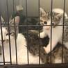 穏やかな母猫と天使のような子猫たち(母+子猫2匹) サムネイル4