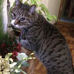 「母の愛猫 サスケ」サムネイル1