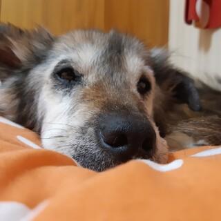 【小雪】まだまだ元気。穏やかなおばあちゃん犬。