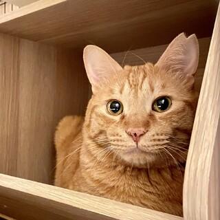 どんな猫ともすぐ仲良し★茶トラBros.デカ茶くん
