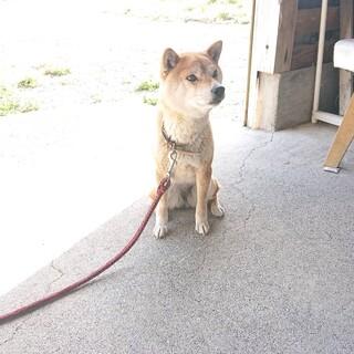 我が家の愛犬の引き取り手を探しています。
