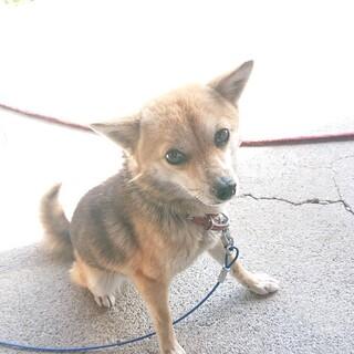 我が家の愛犬の引き取り手を探しています!