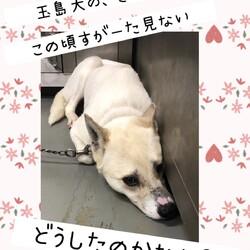 倉敷のママ野犬さんごちゃんの応援歌