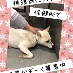「倉敷のママ野犬さんごちゃんの応援歌→譲渡決定!」サムネイル2