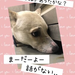 「倉敷のママ野犬さんごちゃんの応援歌→譲渡決定!」サムネイル3