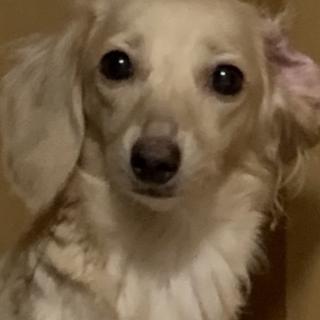 愛犬を可愛がってくれるかたを探しております