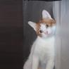 CMで有名なあの猫にそっくり★にゃらん★