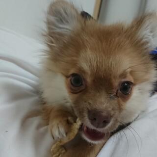 生後6ヶ月の子犬
