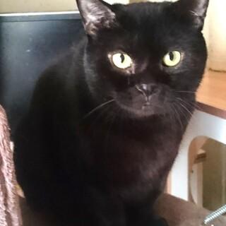 ムチムチ黒巨猫ドルフラングレンさん
