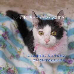 *子猫・中猫・成猫・譲渡会*一時預かりボランティアさん募集説明会 サムネイル1