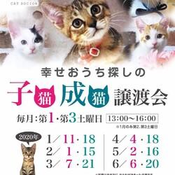 *子猫・中猫・成猫・譲渡会*一時預かりボランティアさん募集説明会 サムネイル3