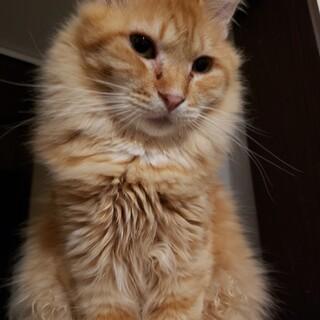 長毛猫のカラシくん