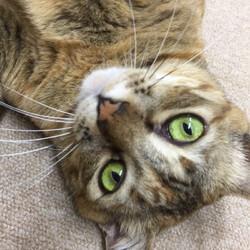 「窓ぎわ猫。ご無沙汰してます。トラちゃんです。」サムネイル1