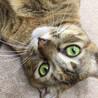 窓ぎわ猫。ご無沙汰してます。トラちゃんです。