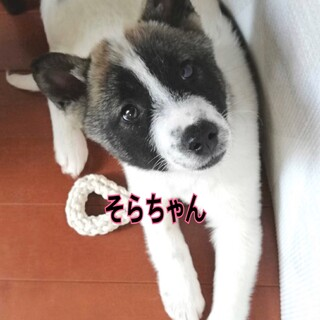 保健所レスキュー☆中型犬子犬☆そらちゃん