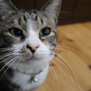 永遠の子猫みたいに可愛い小吉(こきち)君です
