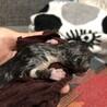 ☆急募☆赤ちゃん猫✴︎✴︎✴︎