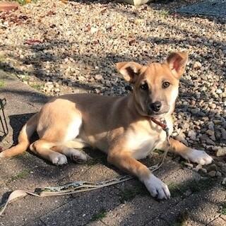 生後4か月ミックス子犬メス和歌ちゃん