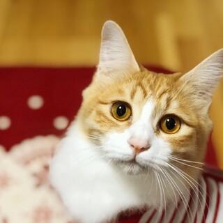長毛の美猫【ルイーサ】