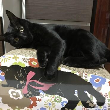 黒猫が二匹!?