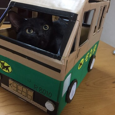 黒猫がいたら一度はやってみたい?!娘が段ボールで作りました(笑)
