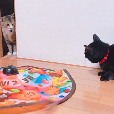 先住猫との距離が近づき始めた頃。お互いを意識しています(笑)