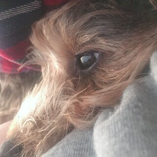 可愛らしいMIX犬です!