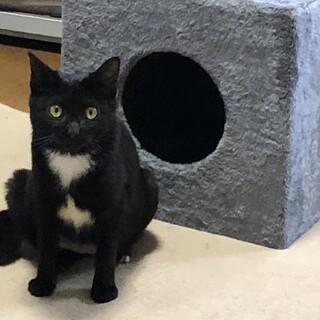 白い模様の黒猫ちゃん