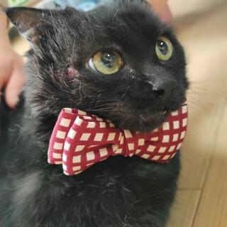 交通事故の猫〜こふねちゃん(仮)〜