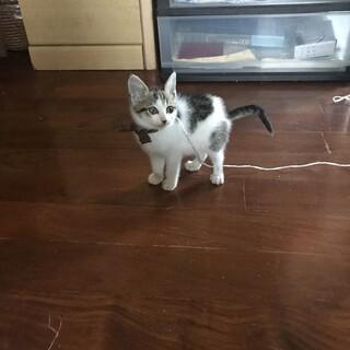 1ヶ月〜2ヶ月の子猫