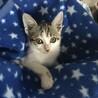 1ヶ月〜2ヶ月の子猫 サムネイル2