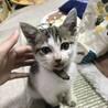 1ヶ月〜2ヶ月の子猫 サムネイル3