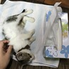 1ヶ月〜2ヶ月の子猫 サムネイル4