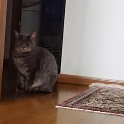 3/26から猫のタオが家を出て帰って来ません