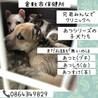 倉敷の小さな野犬子犬の兄弟たち