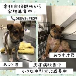 「倉敷の小さな野犬子犬の兄弟→全頭譲渡決定!」サムネイル2