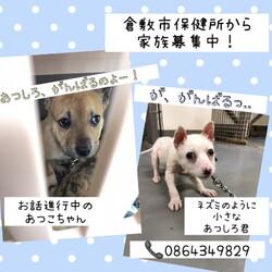 「倉敷の小さな野犬子犬の兄弟→全頭譲渡決定!」サムネイル3