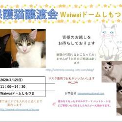 [開催中止] 保護猫譲渡会