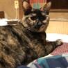 1歳、個性的な柄の可愛いサビ猫♀