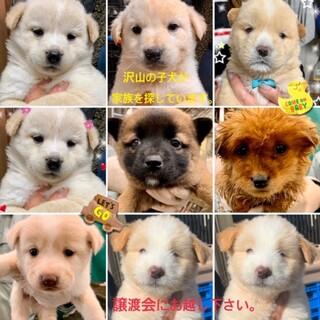 沢山の仔犬が家族を探しています。