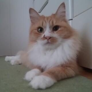 ゴミ屋敷の猫   リズちゃん