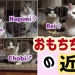 「【子猫おもち】5期生令和元3匹達との近況」サムネイル1