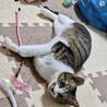 3本足の子猫ピョコたん