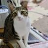 3本足の子猫ピョコたん サムネイル2