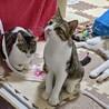3本足の子猫ピョコたん サムネイル3