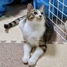 3本足の子猫ピョコたん サムネイル5